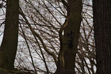 Völlig unbewegt hing ein Eichhörnchen im Baum.