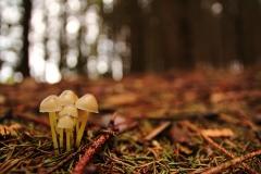 Hübsche Pilzfamilie.